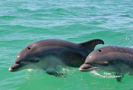 Dolphin Watching Sado River - Half Day Private Tour