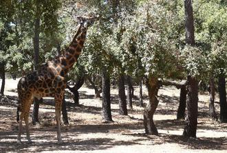 Badoca Safari Park Private Tour from Lisbon