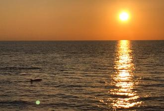 Sunset and Dolphin Tour in Pula